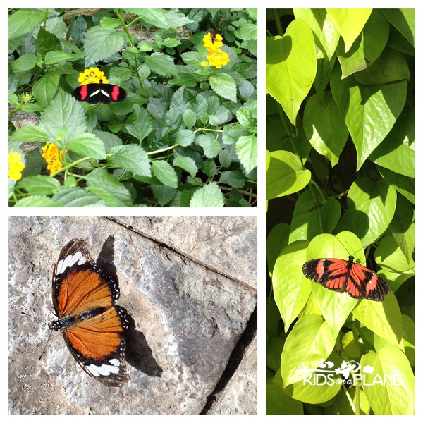 thousands of butterflies at niagara parks butterfly. Black Bedroom Furniture Sets. Home Design Ideas