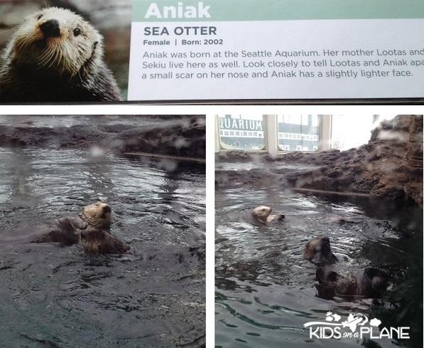 CityPASS Seattle Aquarium Otters