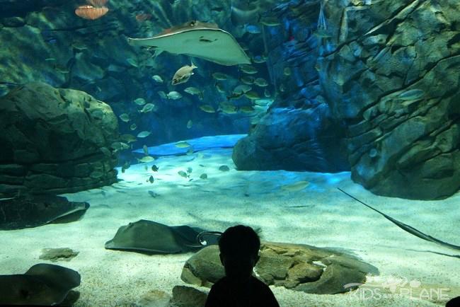 Ripley's Aquarium Toronto Review Stingrays | KidsOnAPlane.com #Toronto #Aquarium #Canada #familytravel