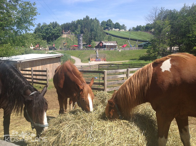 Horseshoe Resort Review Adventure Park Horses